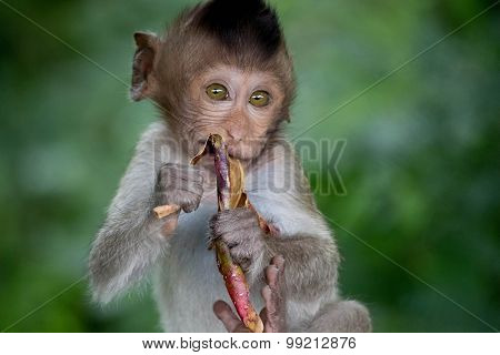 Cute monkeys