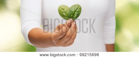 nature and plant concept - closeup of woman hand with green sprout