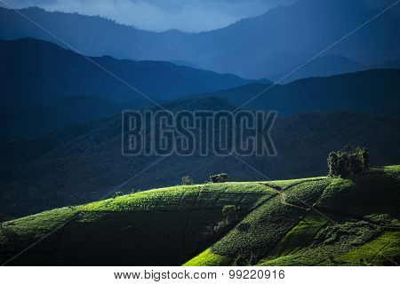 Agriculture field on the hill in Pa Pong Pieng. Chiang Mai ,Thailand.