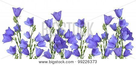 Bluebells Border