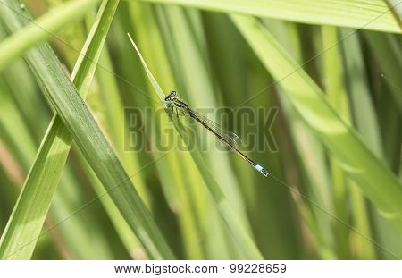 Dragonfly Perched On A Leaf