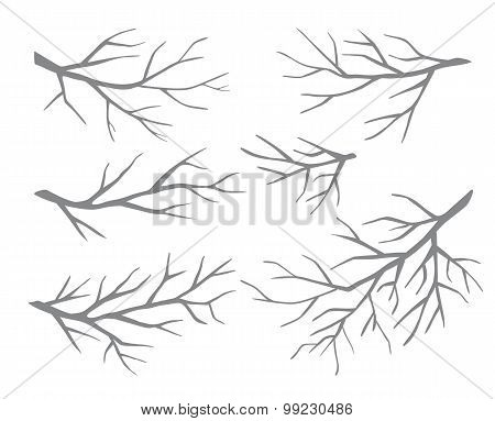 Set of branches