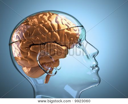 Glass Human Head With Brain