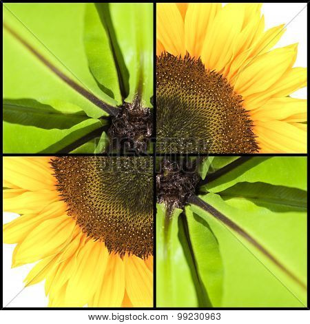 Square Collage Of Sunflower And Fern