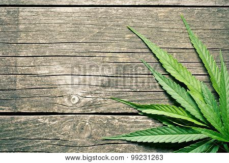 cannabis leaves on old wooden background