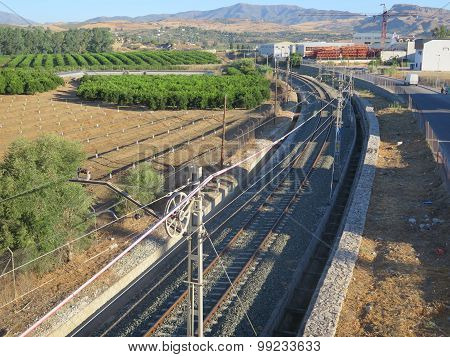 Railway Track And Orange Grove