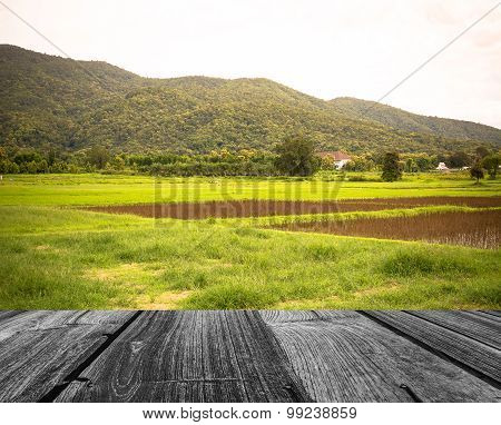 Image Of  Field And Sky In Background