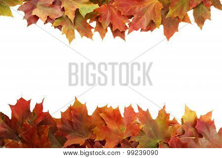Background, autumn leafs