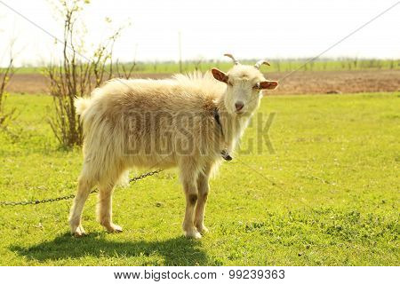 Goatling Outdoors