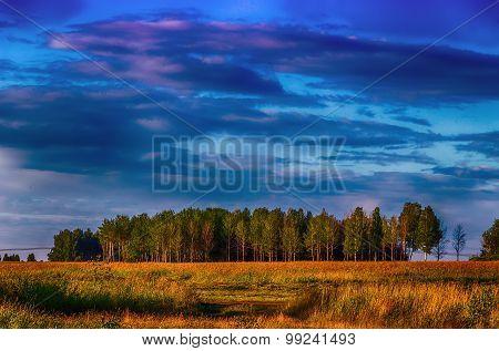 Birch Grove Sunset Landscape