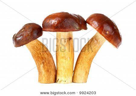 Three Raw Mushrooms
