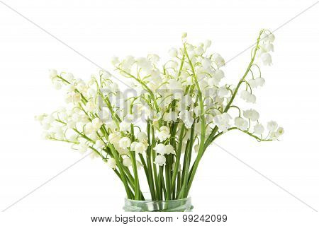 Lily Of The Valley On White Background