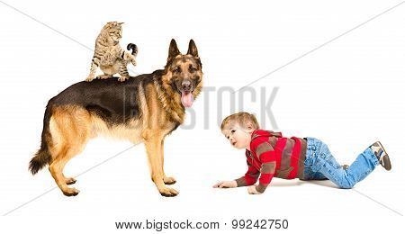 Child plays with dog and cat