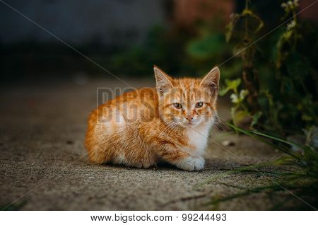 Darling ginger kitten