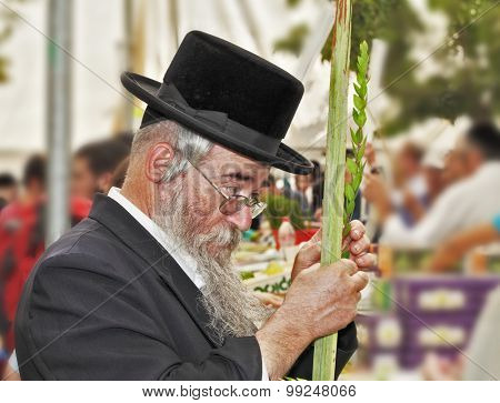 JERUSALEM, ISRAEL - SEPTEMBER 18, 2013: The gray-bearded religious Jew in a black hat carefully chooses ritual plant - myrtle for Sukkot.