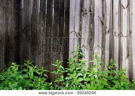 Foliage Nettle On Vintage Wooden Background With Copy Space.