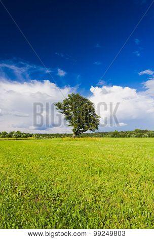 Nobody Outside Plain Nature