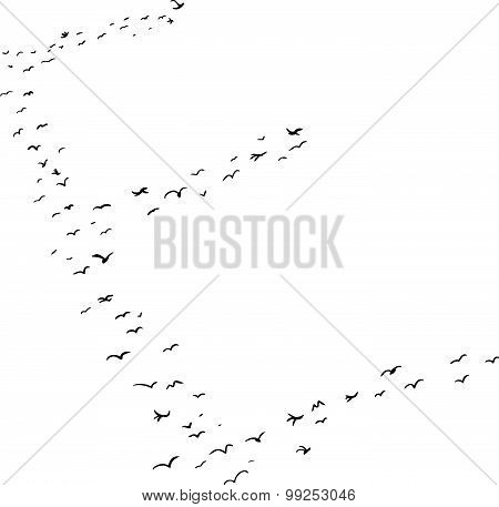 Bird Formation In E