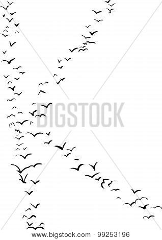 Bird Formation In K