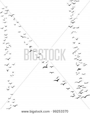 Bird Formation In N