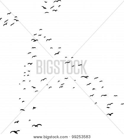 Bird Formation In Diacrtic A