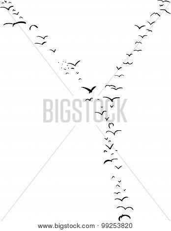 Bird Formation In Y