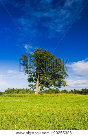 Plain Nature Lonely Tree