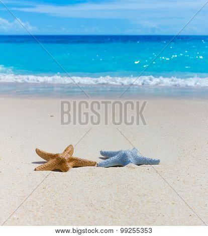 Vacations Stars Waves
