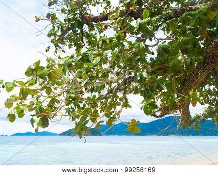 Divine Seashore On a Beach