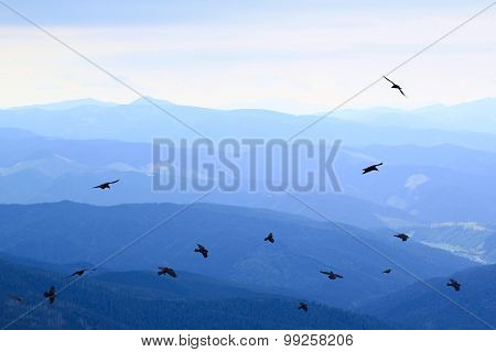 mountain background and ravens