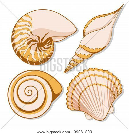 Set of color graphic sea shells