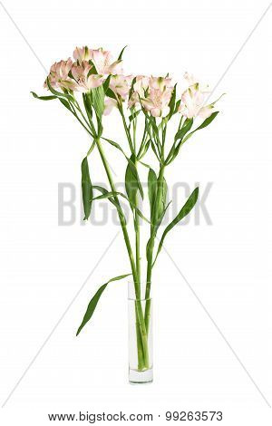 Alstroemeria flowers in a vase