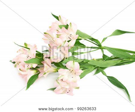 Pile of alstroemeria flowers