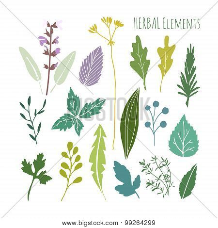 Set Of Hand Drawn Herbal Graphic Elements, Leaves, Vector