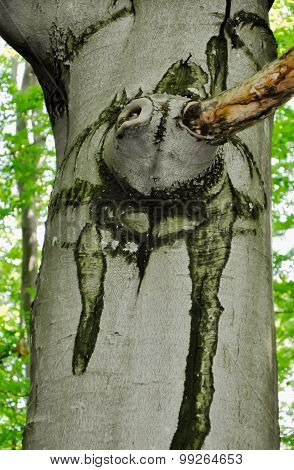 Drawing On The High Tree