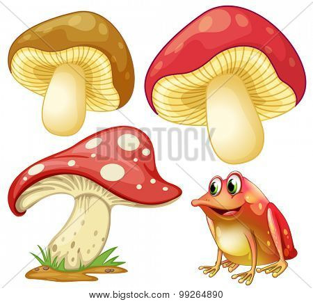 Fresh mushrooms and red frog illustration