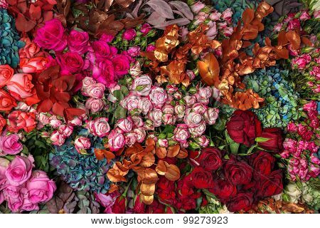 Background Multi-colored Roses