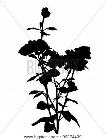Black and White Rose Silhouette. Vector Illustration.