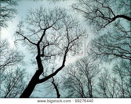 Gloomy Autumn Trees