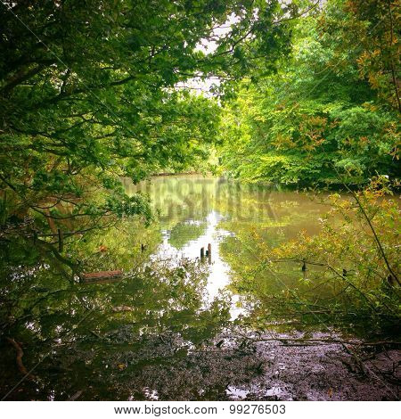 River Scene Background With Lush Tree Forest Vegetation