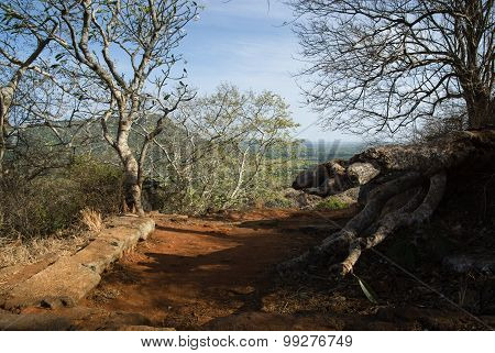Dirt Road In A Tropical Landscape