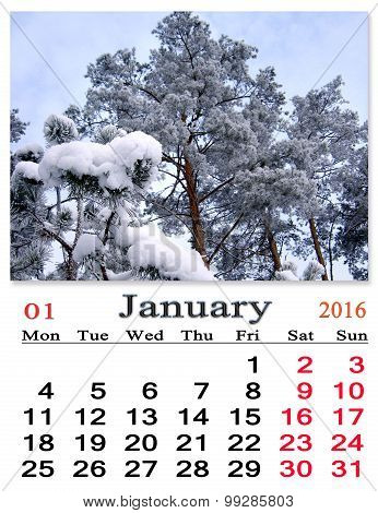 Calendar For January 2016 With Pines Covered By Snow