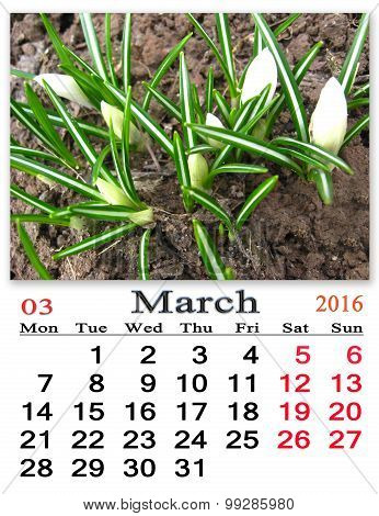 Calendar For March 2016 Year With Crocuses