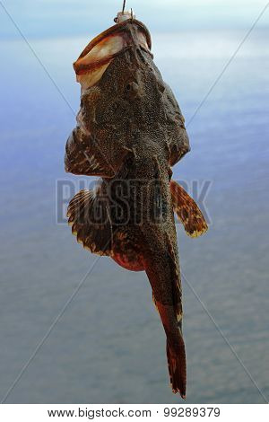 rod fishing sea fish goby