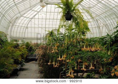 Westmount Park Botanical Gardens