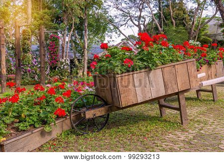 Colorful Of Petunia Flowers On Trolley Wooden In Garden