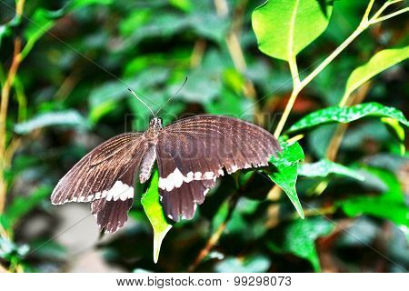 butterfly with wings spread sitting on a green leaf