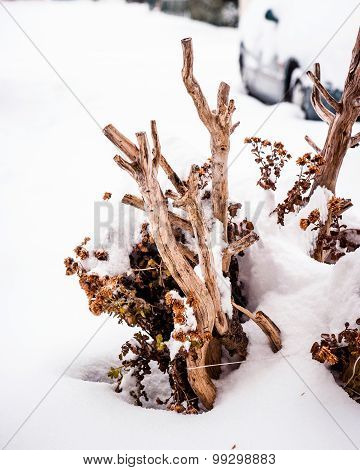 Bare Bush Buried With Snow And Ice In The Winter