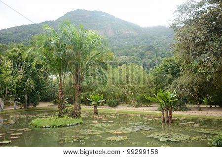 River With Palm Trees And Floating Water Lily