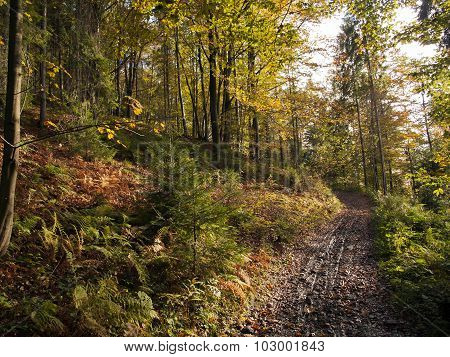 beautiful autumnal forest